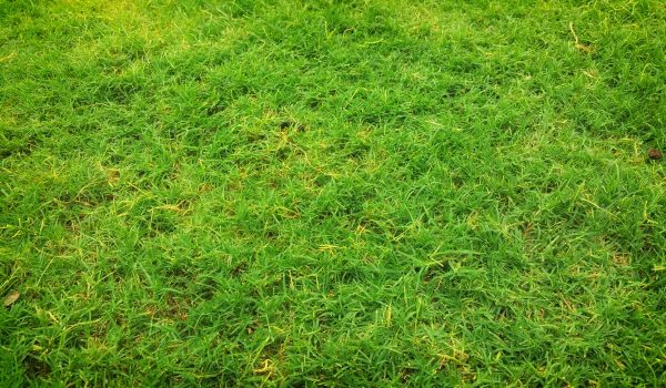 Tips For Helping You Choose Fake Grass In Sydney