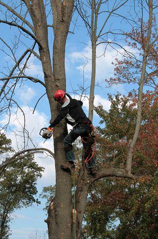 Arborist while on work